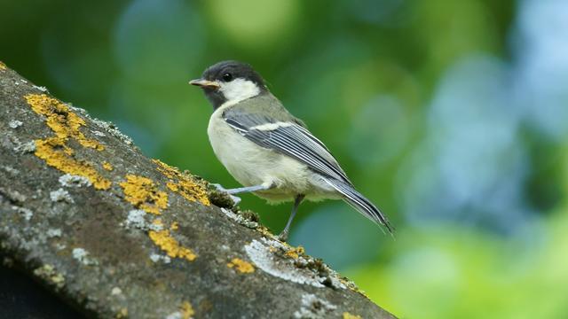 'Geluid van snelwegen verstoort communicatie van vogels'