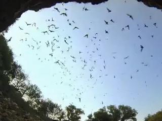 Wetenschappers maakten opnames van honderden soorten