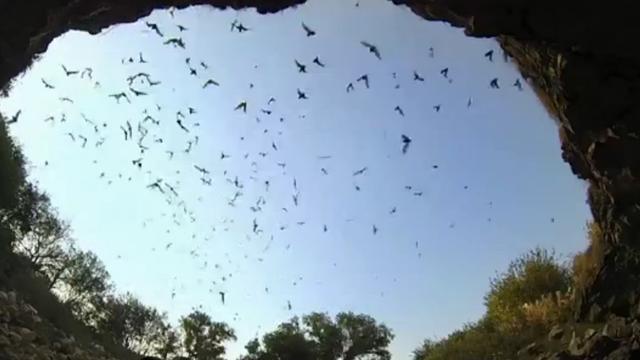 Nieuwe software kan vleermuizen herkennen aan geluiden