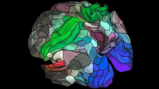 Nieuwe 'atlas' van menselijk brein gepresenteerd