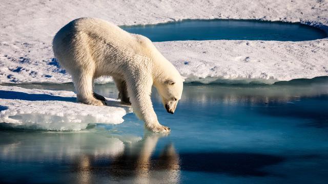 Vogelpoep heeft verkoelend effect op Noordpoolgebied