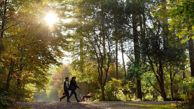 Huishouden minder kwijt aan reisdocumenten en hondenbelasting