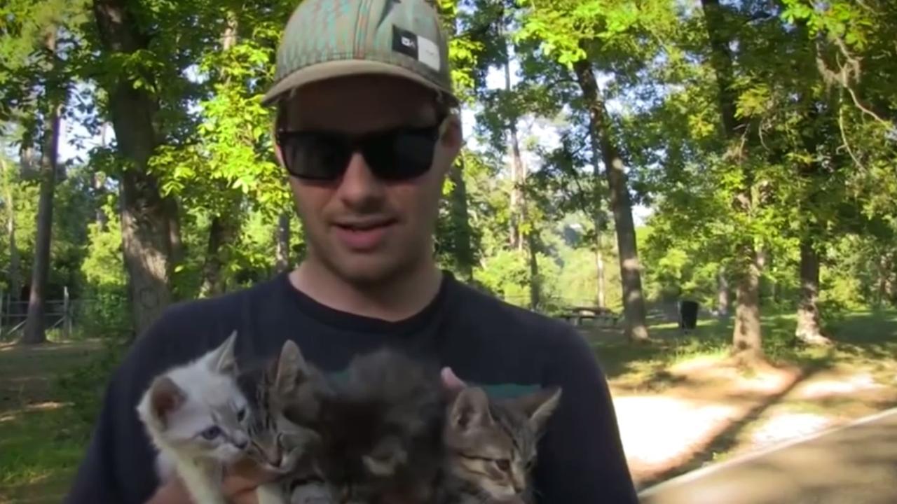 Wandelaars redden vier kleine katjes