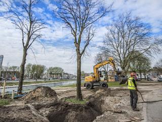 Drie lindebomen van 13 tot 18 meter hoog zijn verplaatst