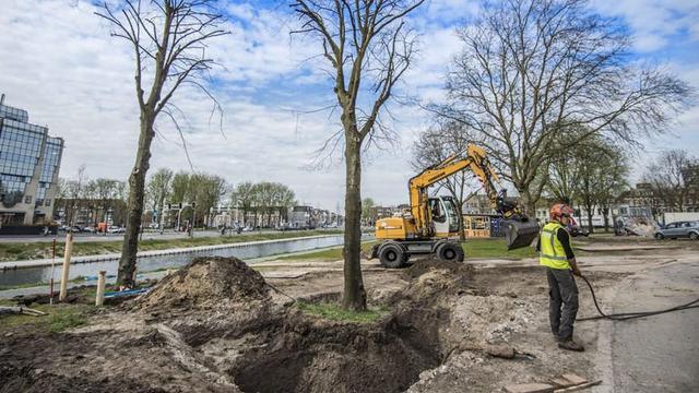 Bijzondere boomverplanting op nieuw Paardenveldpark in Utrecht