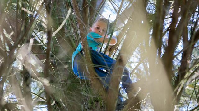 Brandweer redt kind (7) uit hoge boom in Roosendaal
