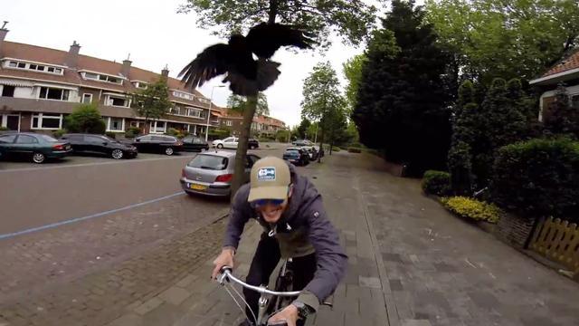 Kraaien vallen fietsers in Voorburg aan