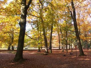 Staatsbosbeheer houdt op 23 december een lichtjeswandeling door het mastbos