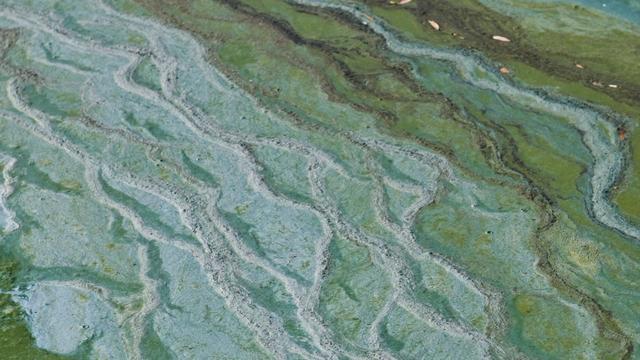 Provincie waarschuwt voor blauwalg in zwemplas Kardinge