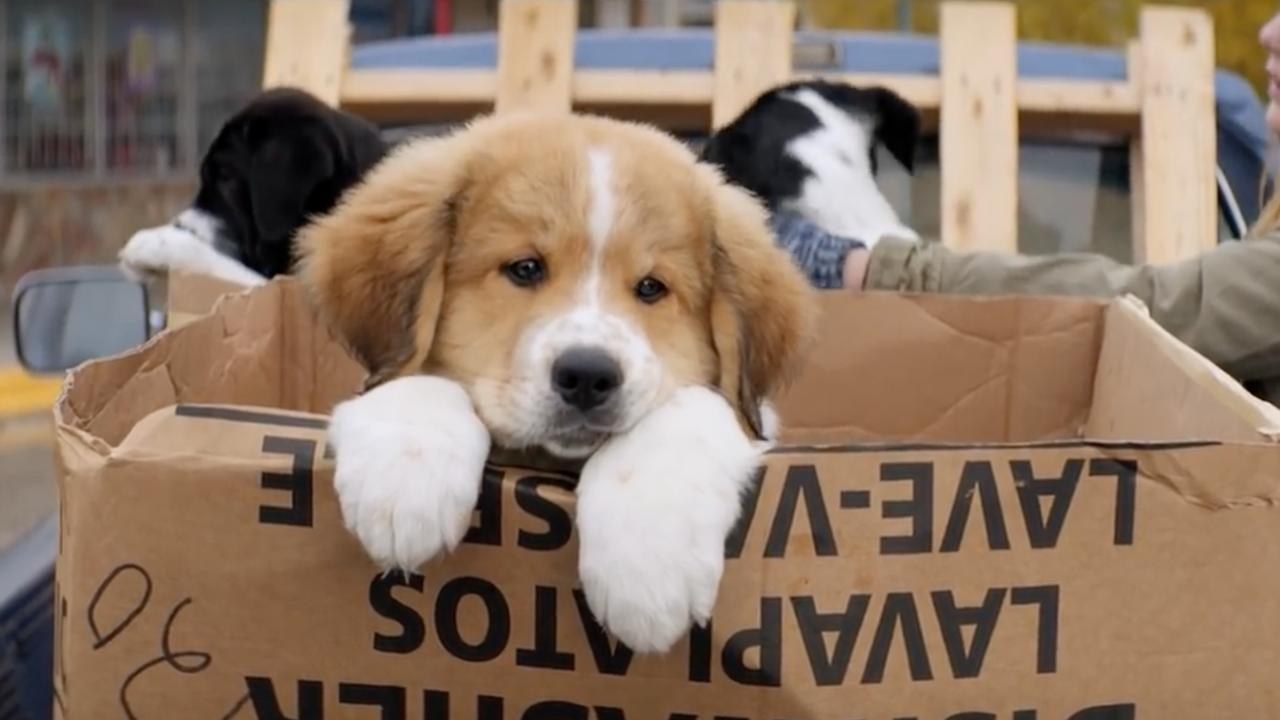 A Dog's Purpose - trailer