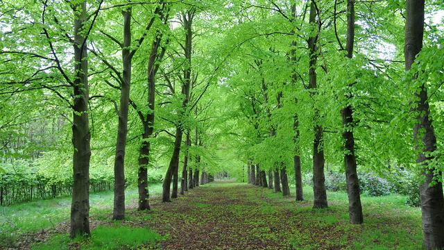 College maakt nieuw plan voor groen in Moerdijk