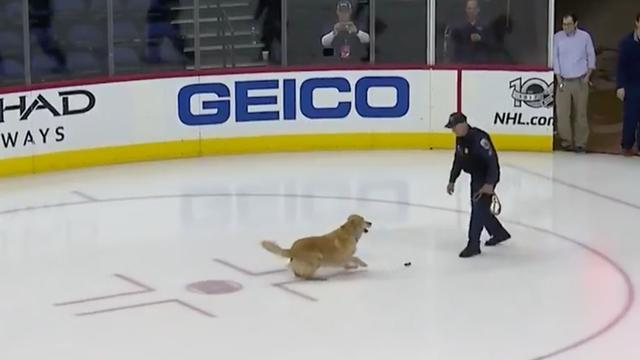Hond apporteert ijshockeypuck voorafgaand aan wedstrijd