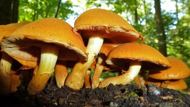Fossielen paddenstoelen gevonden van bijna 100 miljoen jaar oud