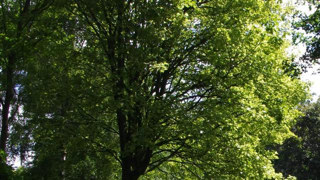 Gemeente plaatst meer bomen aan de Lage Zijde