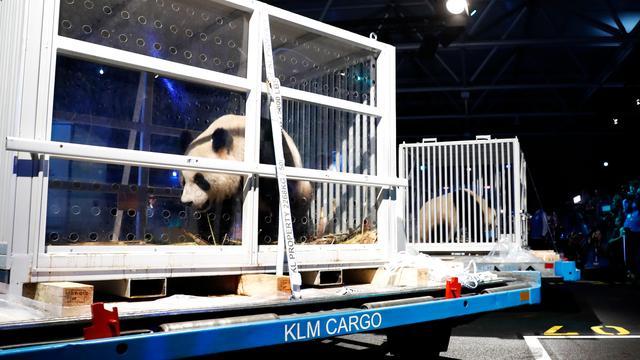Panda's Ouwehands Dierenpark mogen op 30 mei naar buiten