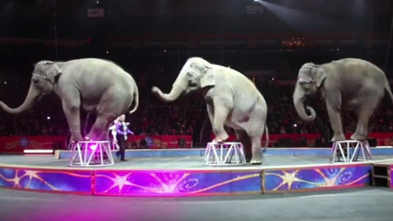 Laatste optreden van olifanten in Amerikaans circus