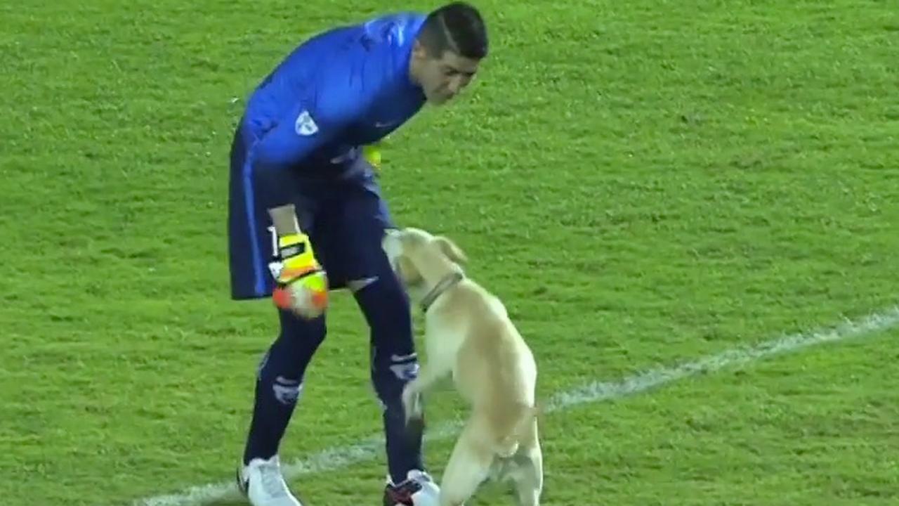 Hond op het veld tijdens duel Copa Libertadores