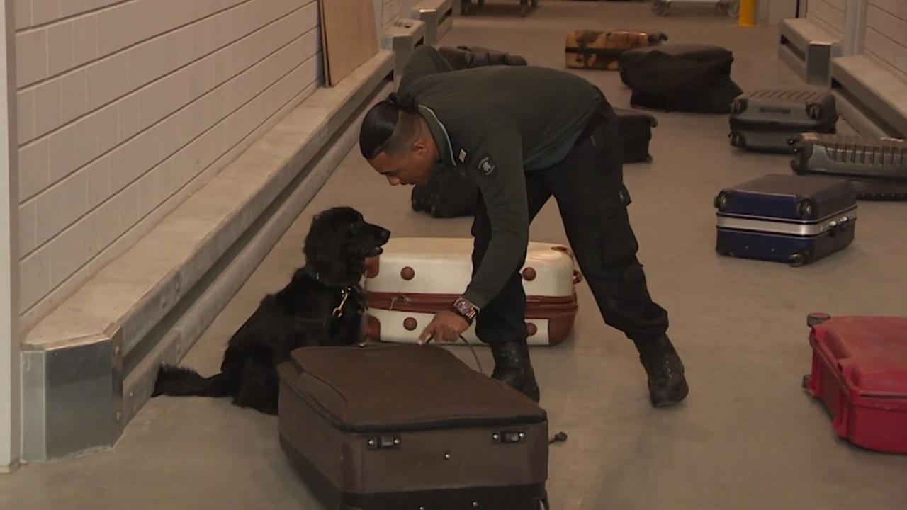 Speurhond Jacky naar Bonaire om dieren in bagage op te sporen