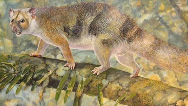 Prehistorische buidelleeuw vernoemd naar David Attenborough