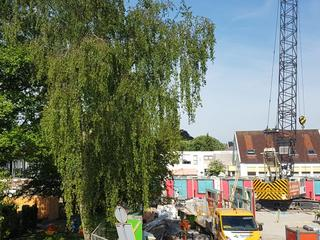 Behoud bomen hangt af van gemeente Leiden