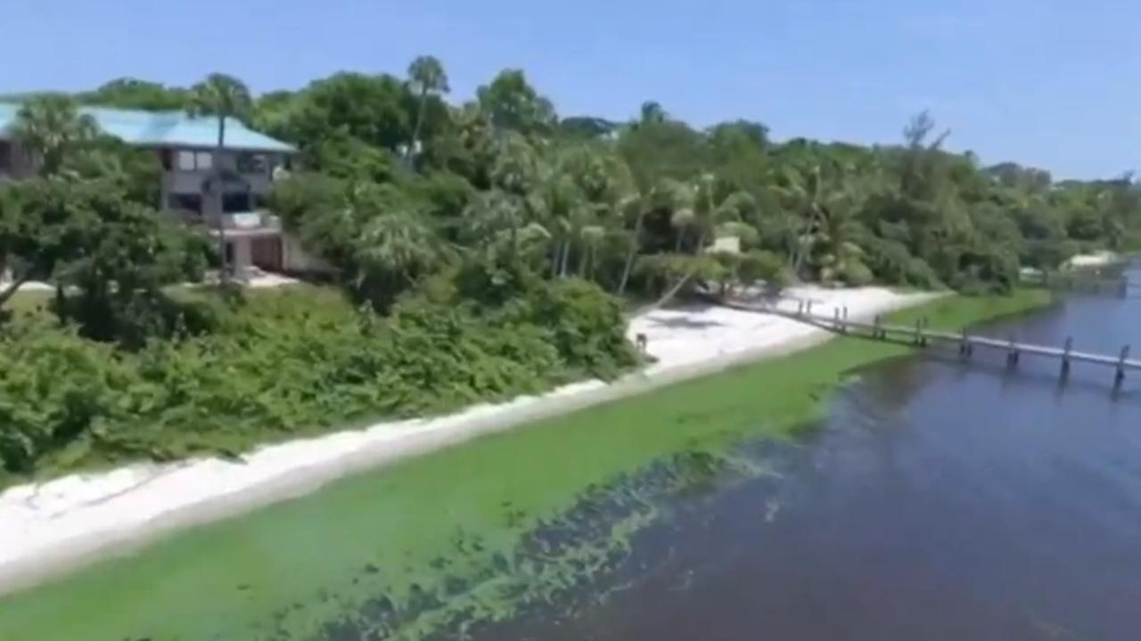 Populaire stranden Florida gesloten wegens algenplaag