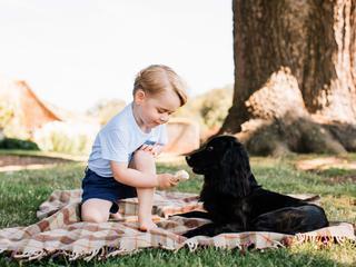 'Zuivel en chocolade gevaarlijk voor honden'