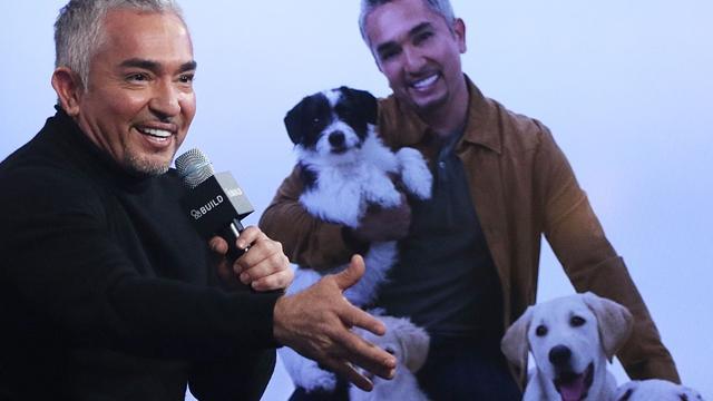 Onderzoek mishandeling varken door hondentrainer Cesar Millan 'overdreven'
