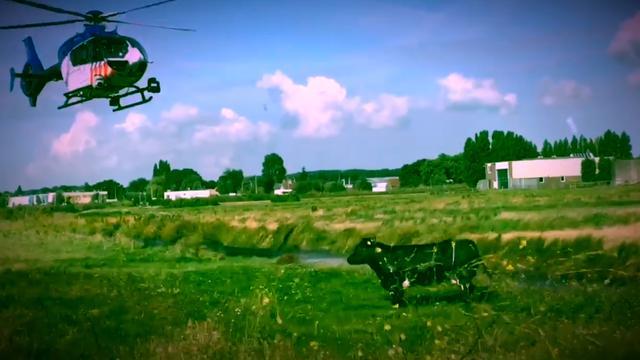 Politiehelikopter helpt bij vangen koe in Pijnacker-Nootdorp