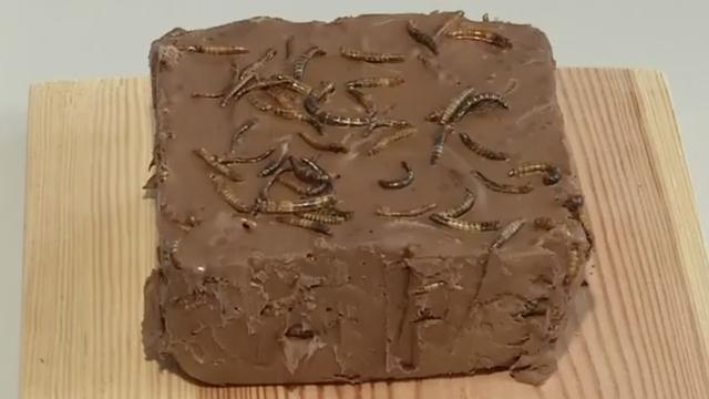 Poolse wetenschappers bakken chocoladetaart met wormen