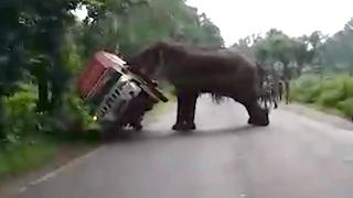 Opgejaagde olifant duwt truck omver in India