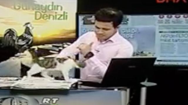 Kat bezoekt televisiestudio tijdens live-uitzending