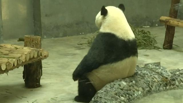 Dieren zitten op ijs voor verkoeling in Chinese dierentuin