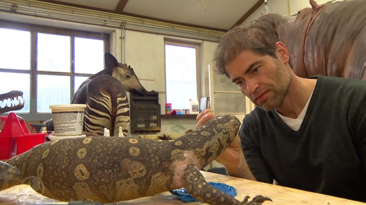 Venloos familiebedrijf renoveert 60 wilde dieren