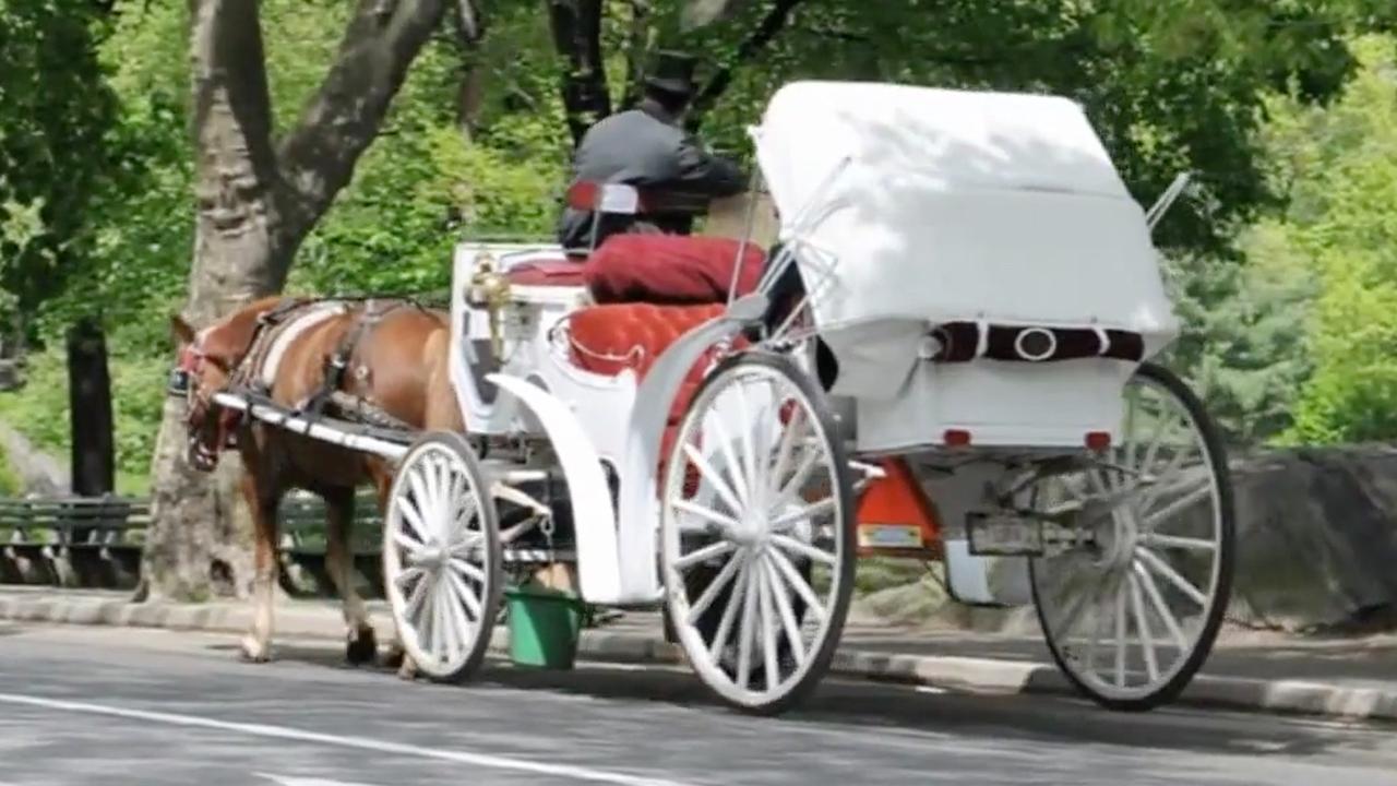 Paard en wagen in Central Park