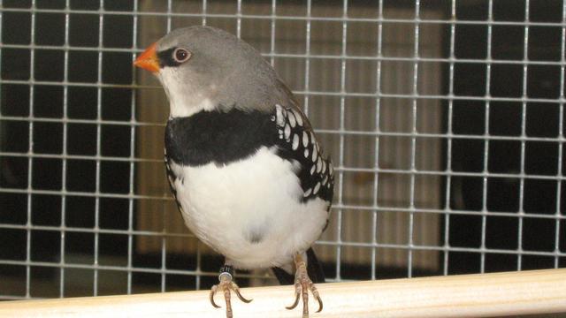Vogeltentoonstellingin Koutershof Rijsbergen