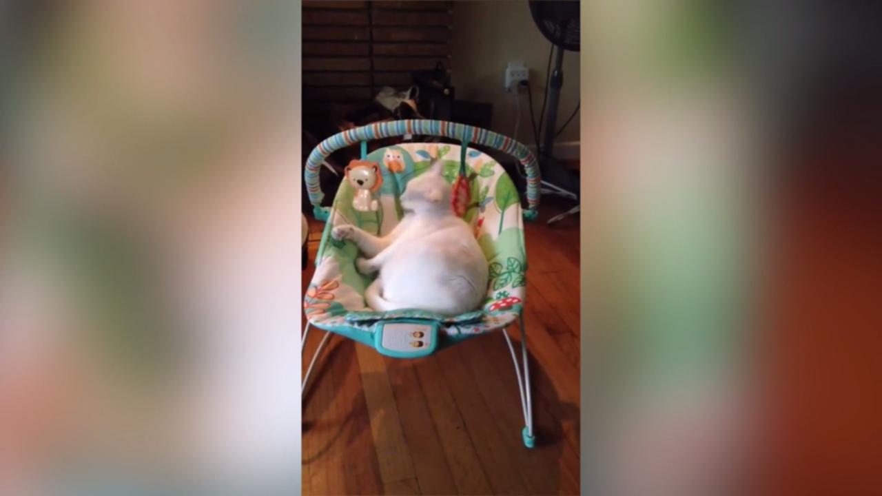 Kat vermaakt zich opperbest in babyzitje