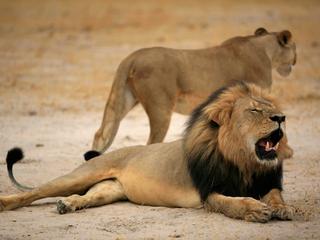 Twee jaar terug was veel woede over het doden van Cecil