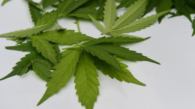 Onderzoekers vinden geen relatie tussen gebruik cannabis en depressies