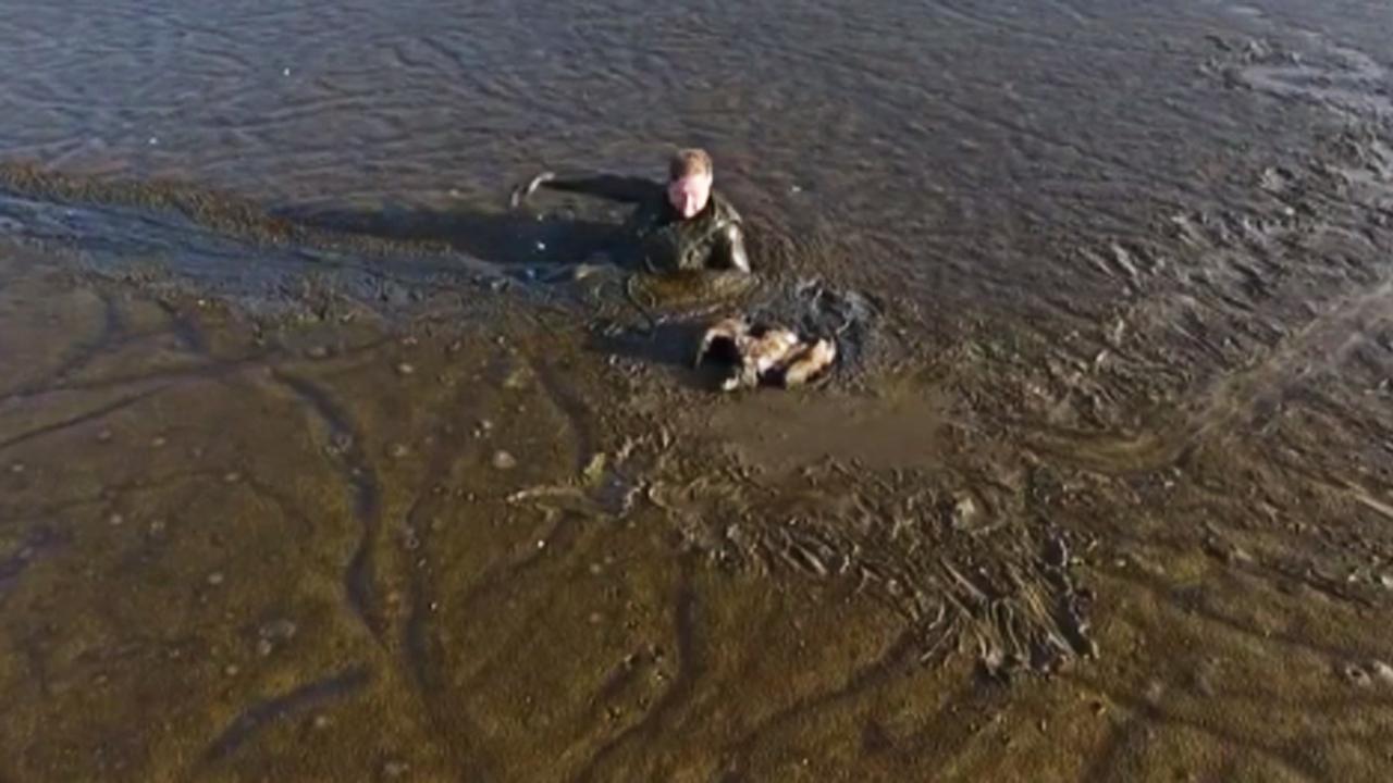 Fotograaf redt arend uit de modder