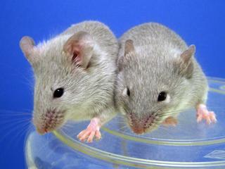 Eerder werd aangenomen dat dieren pas in de buurt van mensen leefden na uitvinding landbouw