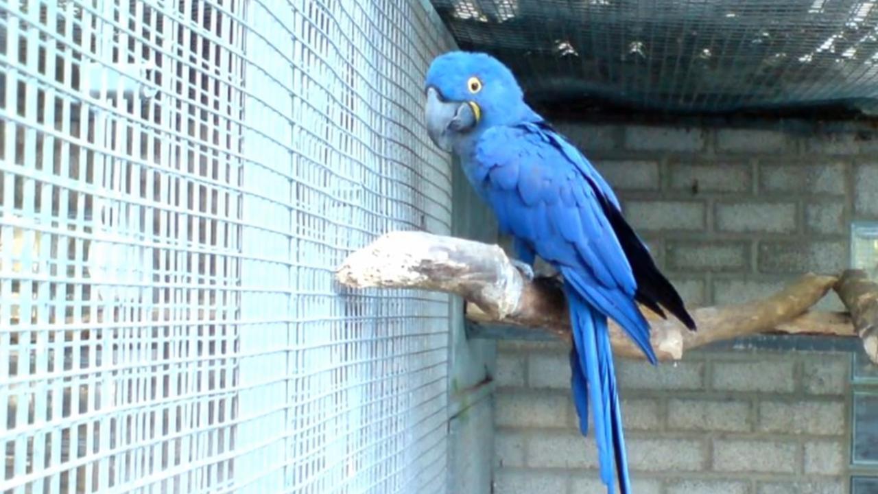 Papegaaiendieven slaan twee nachten op rij toe