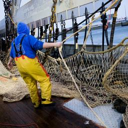 Geen EU-onderzoek naar fraude Nederlandse pulsvisserij