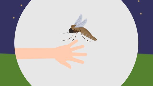 Waarom jij wakker wordt vol muggenbulten en je partner niet