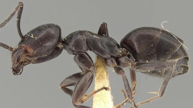 Van welke insecten krijgen we deze én de komende zomers last, en waarom?