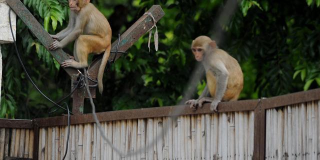 Chinese luchtmacht zet apen in om lucht vogelvrij te maken