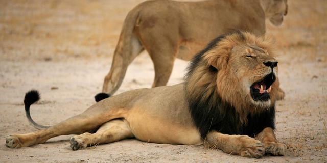 Zimbabwe trekt jachtverbod op groot wild weer gedeeltelijk in
