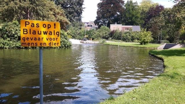 Waterschap constateert blauwalg in vijver in Weihoek in Roosendaal