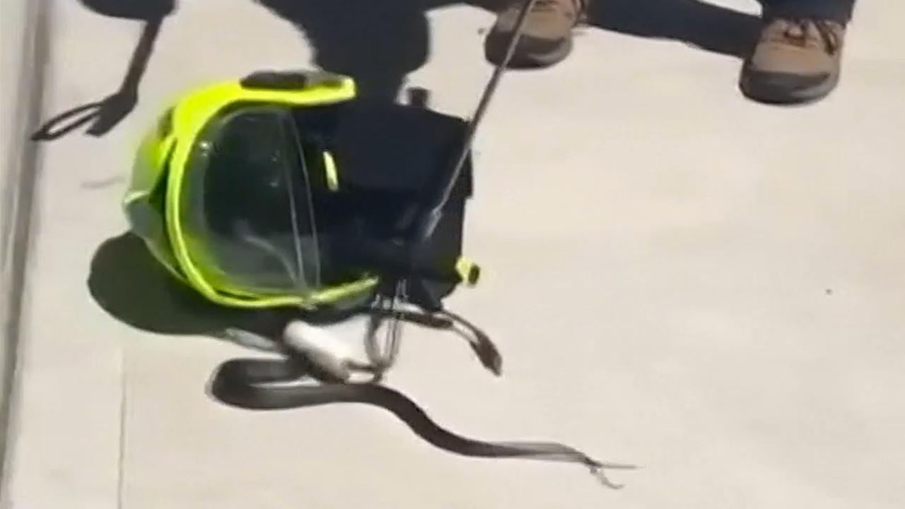 Australische brandweerman vindt slang in helm