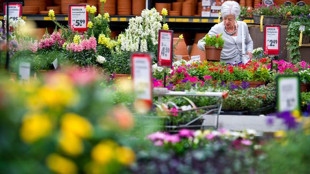 De kracht van kamerplanten: hoe groener, hoe beter de luchtkwaliteit