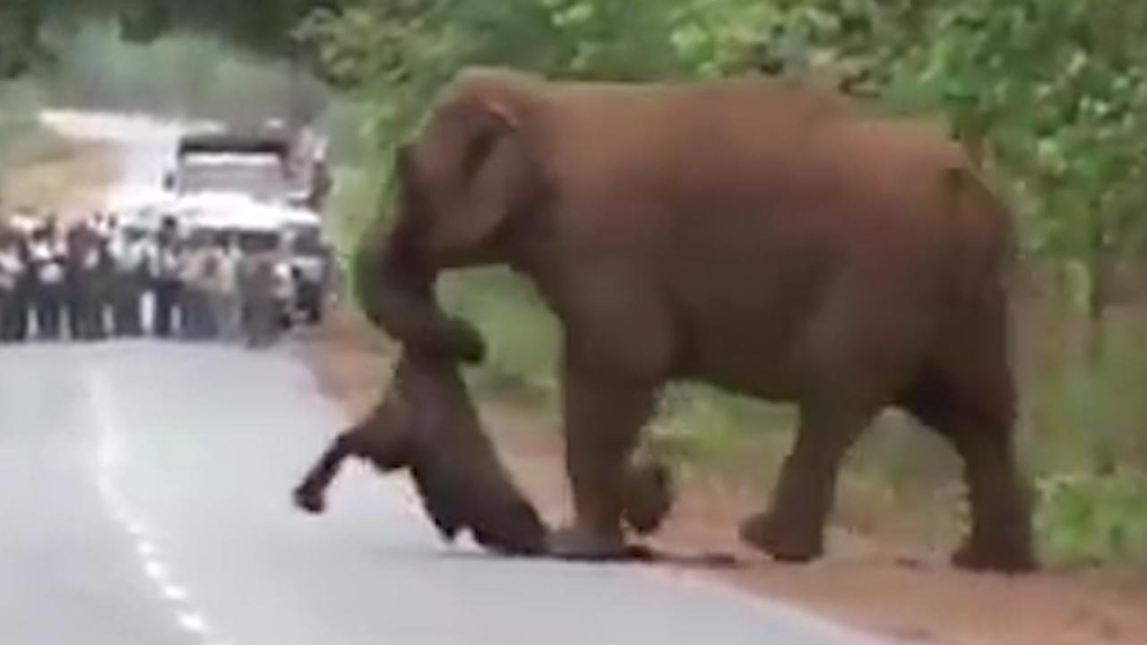 Kudde olifanten rouwt om overleden kalf in India